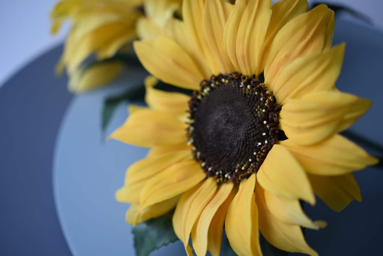 The Sunflower Class